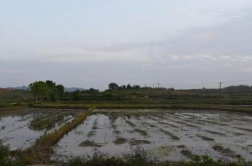 湖南华容庙里湾遗址考古发掘收获