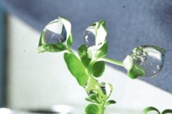 植物能接收太空发来的信号吗