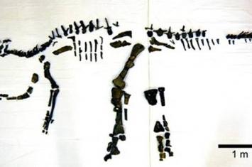 日本国内最大鹉川恐龙化石模型复原完毕
