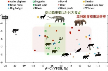 《第四纪科学评论》:华南和东南亚地区更新世亚洲象和剑齿象摄食行为的研究进展