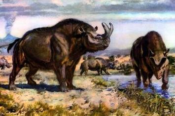 宁夏灵武首次发现古近纪始新世大型哺乳动物雷兽化石