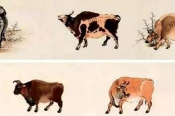 中国家养黄牛的起源