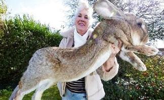 世界上最大的兔子,大流士兔子体长1.22米重45斤(如同七岁孩童大)