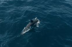 盘点已灭绝的十大可爱动物,消失十年的白鳍豚终于再次出现