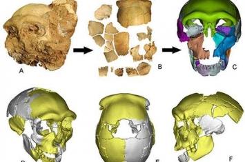 中国发现向早期现代人连续演化的更新世中期人类头骨化石