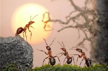 神秘的蚂蚁王国
