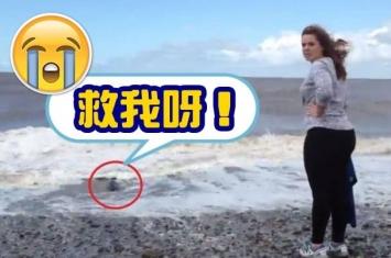 小海豹冲上英国海岸 幸获善心男女拯救