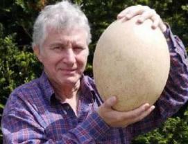 世界上最大的鸵鸟蛋,长15厘米宽8厘米重5斤(百蛋之王)