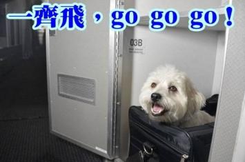 """美国航空公司推""""宠物专座"""" 跟主人一起坐飞机"""