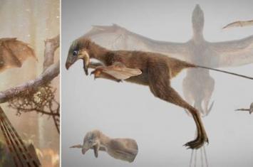 几十吨重的恐龙是怎么样飞向蓝天的?