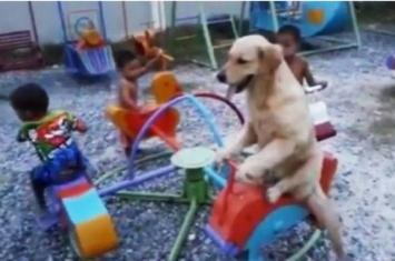 拉布拉多犬跟小朋友一起骑旋转木马