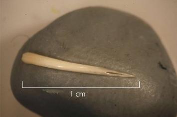美国德州科涅霍岩洞考古发现1500年前有人吞了一整条毒蛇 还吃了丝兰的花