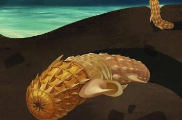 发现最早的动物蜕皮行为 5.35亿年前有吻动物的化石证据