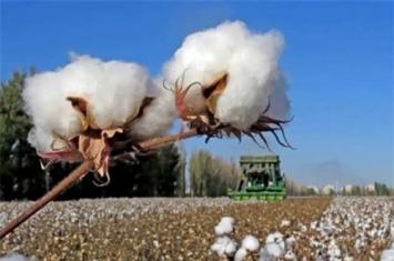 中国什么时候出现棉花的