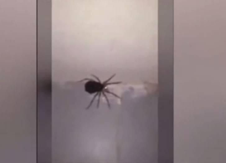 """母蜘蛛突然""""爆炸""""分身成上百只小蜘蛛"""