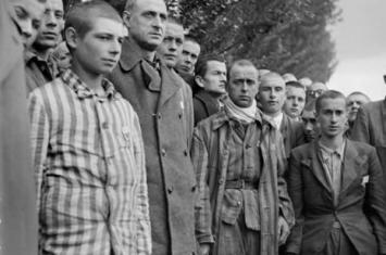 """纳粹曾在集中营实施""""麦肯奇行动""""计划——繁育巨型安哥拉兔"""