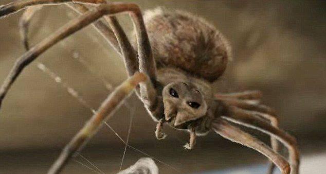 """美国女摄影师在自家门口抓拍到""""大笑""""蜘蛛网"""