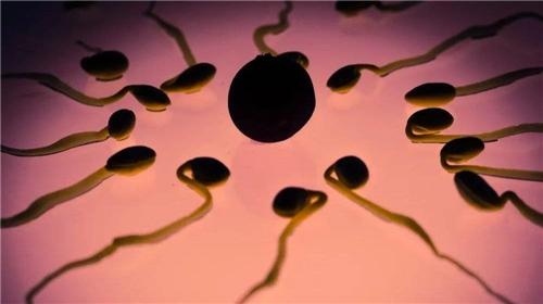 你的精子数量只有你爷爷的一半