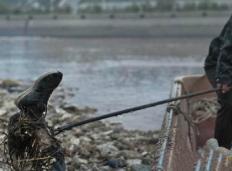 黄河灵异事件真实案例,黄河尸抱船害死黄河河凫子