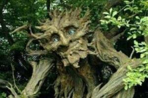 食人树吃人视频,方圆百米任何生物都会被残忍吃掉
