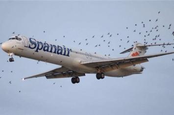 飞机遭到飞鸟撞击后果是什么