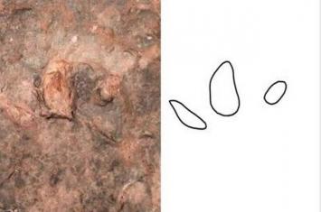 """云南禄丰滑石板村发现1.5亿年前脚印化石 """"主人""""是身高超过一米的巨鸟或鸟形恐龙"""