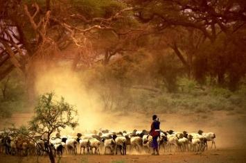 放牧和耕作是分阶段传入非洲东部并影响人群的
