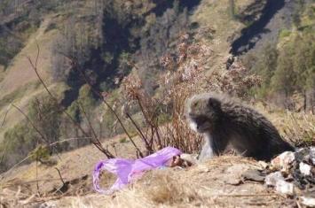 印尼雅加达茂物县每天有超过百只猴子下山到传统菜市场打劫