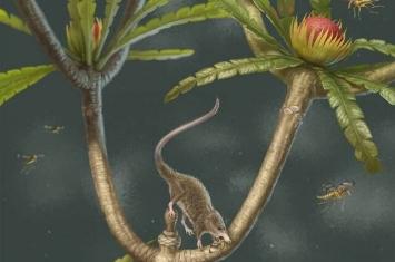 """侏罗纪""""微小柱齿兽""""Microdocodon揭示哺乳动物舌骨的早期演化"""