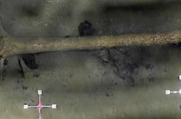 """""""失落的世界"""":立陶宛境内波罗的海海底发现有1万年前沉没森林"""
