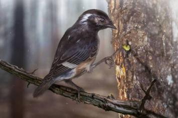 """封印在缅甸琥珀中的远古鸟类""""陈光琥珀鸟""""Elektorornis chenguangi有着古怪的长脚趾"""