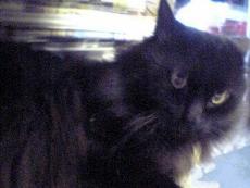 猫死了为什么不能埋,猫有九条命埋了会复活