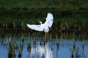 白鹭是几级保护动物