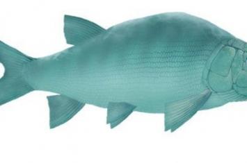 盘州暴鱼是什么