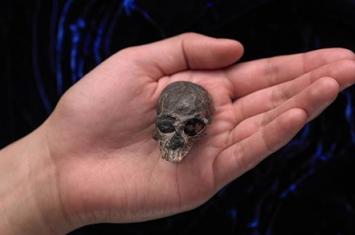 智利猴化石揭示人类大脑的高速演化趋势