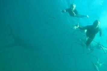 澳大利亚潜水者水下拍照未察觉身后潜伏巨大鲨鱼