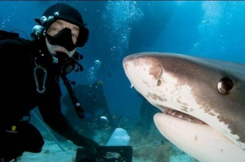 2015年死于自拍的人比死于鲨鱼攻击的人还多