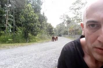 马来西亚男子和猩猩的搞笑自拍