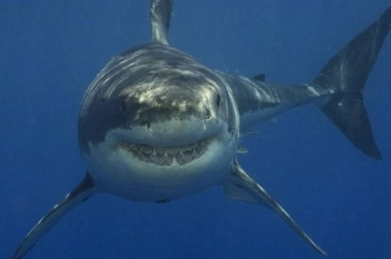 没有尸体只见染红的海水 澳洲教师疑已葬身大白鲨腹