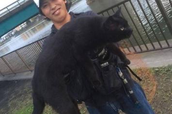日本网友去河边钓鱼遇到巨大神秘黑色野猫