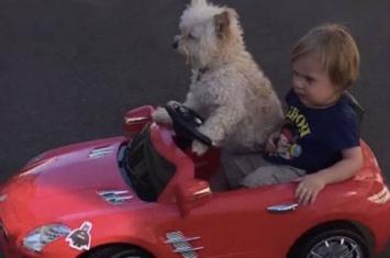 美国一只小狗开玩具车带小主人兜风的视频走红网络