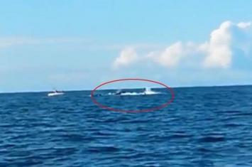 新西兰钓鱼发烧友抓拍杀人鲸捕猎海豚差点惹来攻击