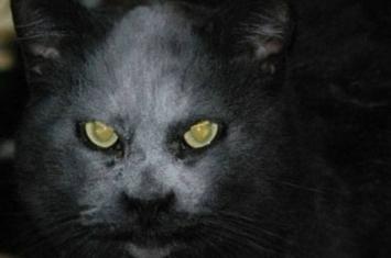 """恶灵附身?黄眼黑猫似""""魔鬼化身"""""""