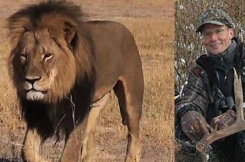 """津巴布韦环境部长称美国牙医沃尔特帕尔马不会因猎杀狮王""""塞西尔""""而遭指控"""