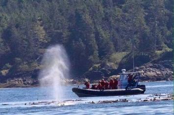 载有27人的观鲸船在加拿大不列颠哥伦比亚省附近海域沉没