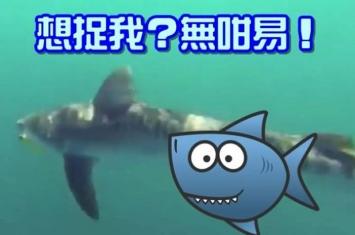 澳洲男子出海钓鱼遇虎鲨 拍下恶斗20分钟过程