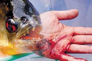 食人鱼吃人真实案例,小孩被食人鱼啃成骷髅(视频)