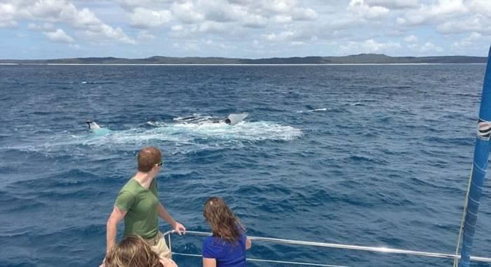 外国游客到澳洲观鲸 座头鲸拍浪欢迎
