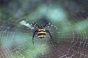 世界上最大的蜘蛛网,有足球场那么大(百万蜘蛛大军织成)