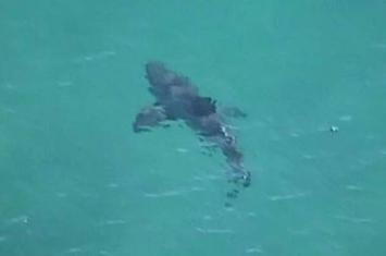 鲨鱼攻击频繁 澳大利亚政府派出无人机追踪鲨鱼行踪
